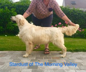 Stardust of the Morning Valley