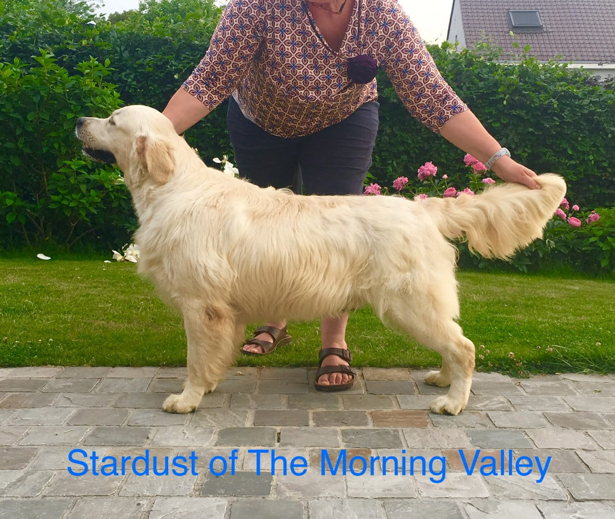 Stardust of the Morning Valley - Noroy du Plessy